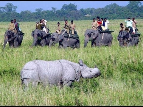 Kaziranga National Park in Assam